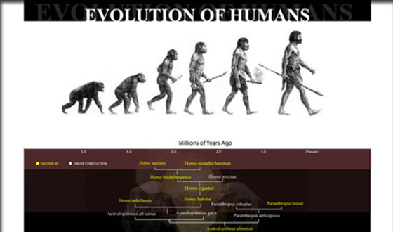 Human Evolution web site